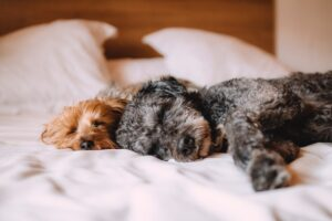 Pet Loans: Take Care of Your Pets